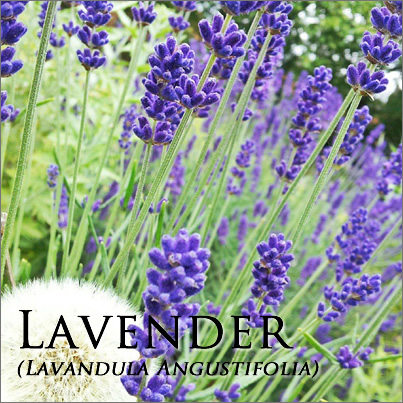 Lavender oil - great for all kinds of skin issues.