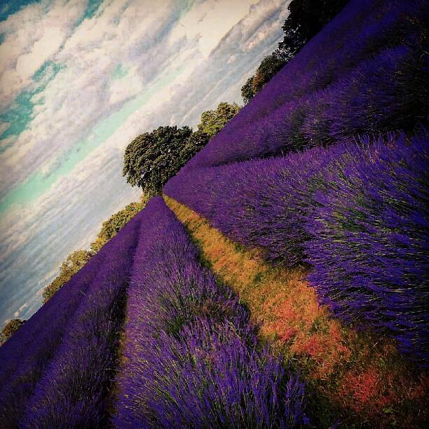 Add Some Fragrance - Lavender - Sleeping Aid