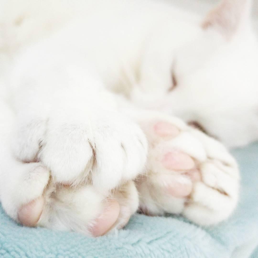 Relax - Sleepy Time